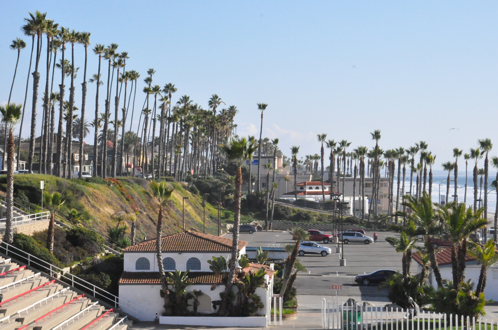 Palm trees along the beach in Oceanside, CA