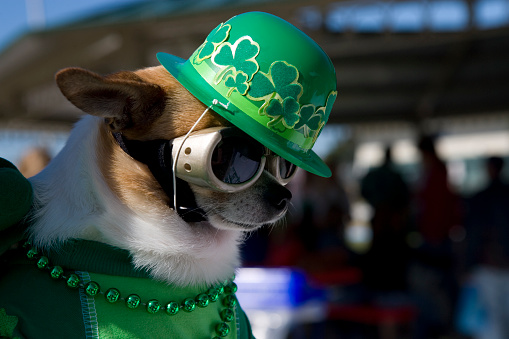 Save Green on Your St. Patrick's Day Celebration