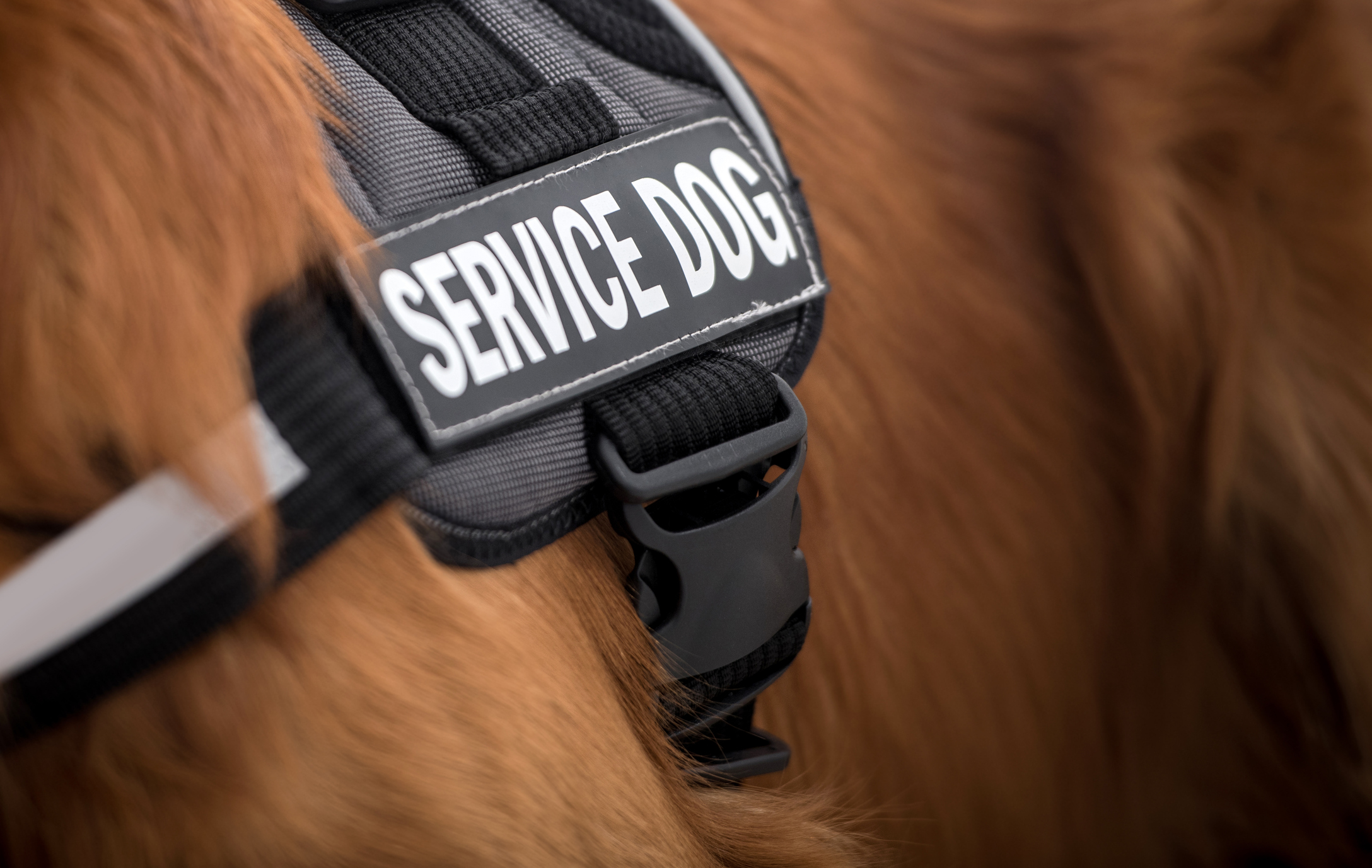 5 Types of Service Dogs