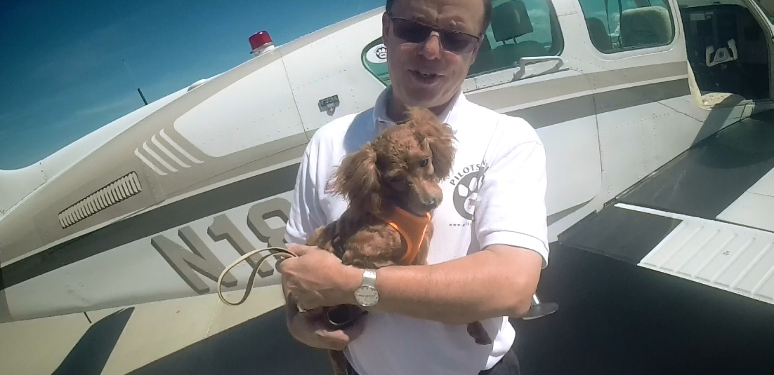 Planes, Pilots and a Poodle from Korea – Another Pilots N Paws Rescue Mission