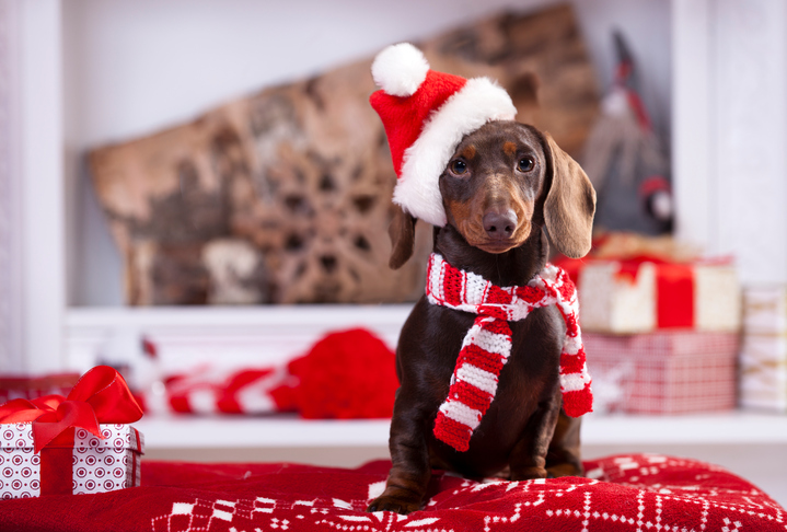 Holiday Safety Tips for Pets