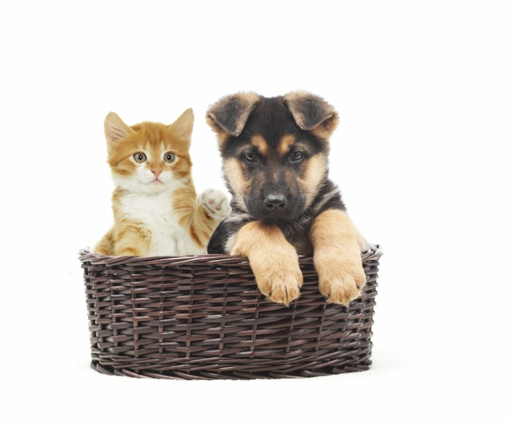 Tips for Saving Money on Pets